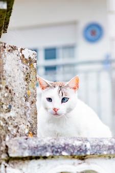 Chat sauvage blanc assis sur un mur