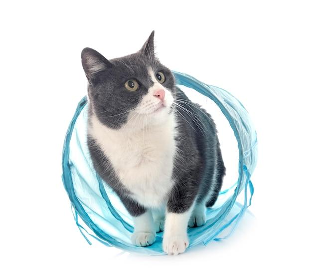 Chat sauvage devant fond blanc