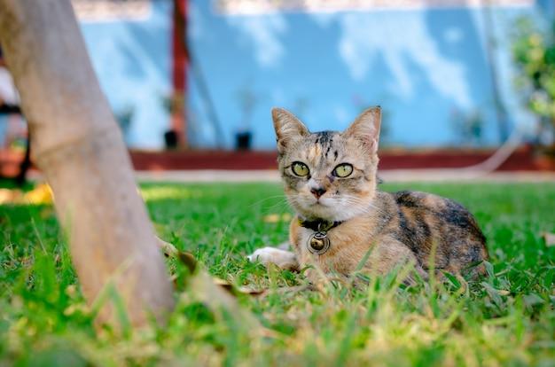 Chat se détendre et assis sur l'herbe.