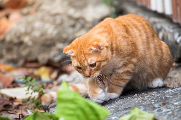Le chat se détendre sur le sol, chat brun et chat blanc