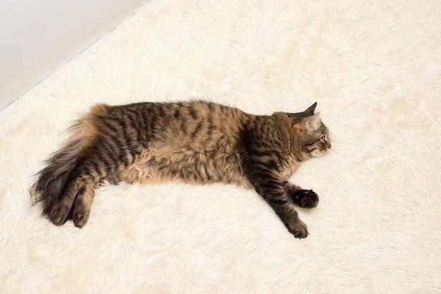 Le chat se repose sur une couverture en blanc, artificiel, en peluche, en fourrure