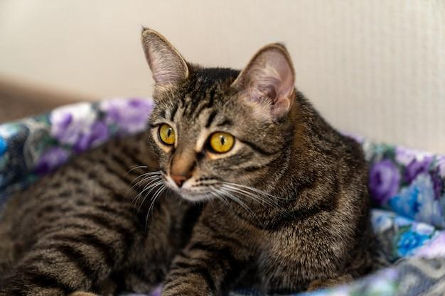 Le chat se trouve sur le berceau et siotrit en avant avec de grands yeux