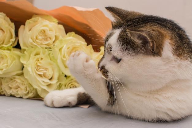 Le chat se trouve près d'un bouquet de roses claires.