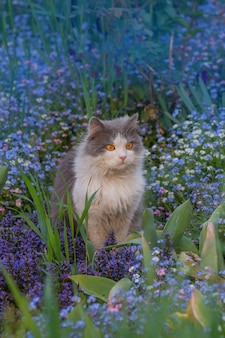 Chat sentant la fleur dans un jardin fleuri coloré. chat attrayant se détendre à l'extérieur dans le jardin.