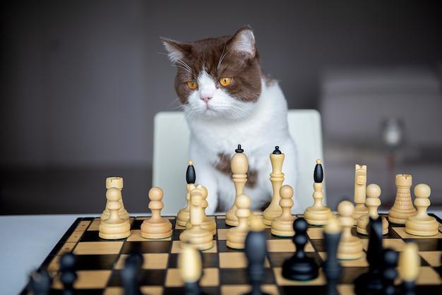 Un chat sérieux joue aux échecs