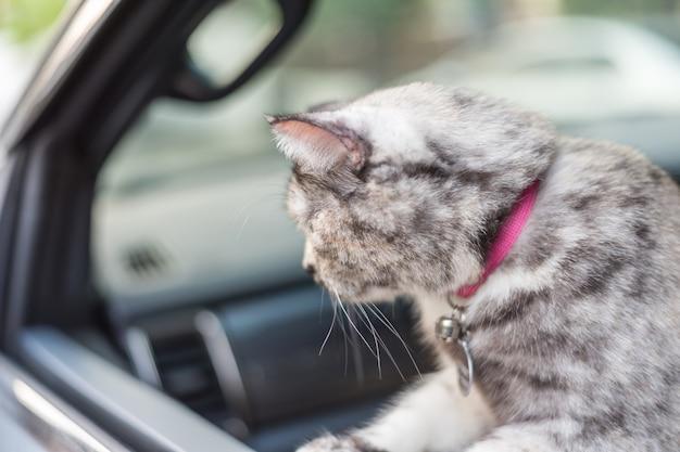 Chat si mignon assis dans une voiture attendre pour voyager
