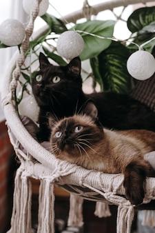 Chat siamois et chat noir dans une chaise en osier dans un style boho