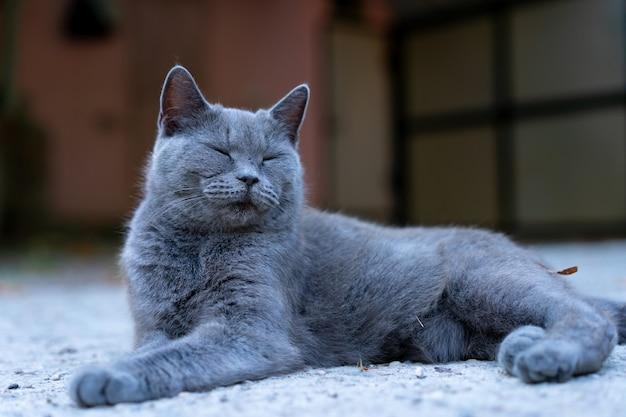 Chat siamois couché dans la rue