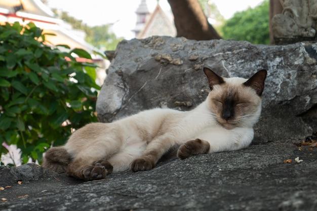 Chat siamois dort sur une pierre dans le parc