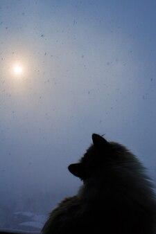 Un chat sibérien est assis près de la fenêtre et regarde les flocons de neige à l'extérieur de la fenêtre par une froide journée d'hiver avec une tempête de neige. chute de neige sur fond de soleil, qui perce à travers les nuages.
