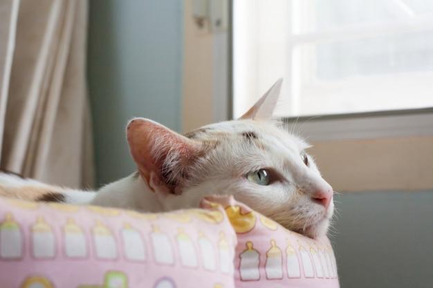 Un chat solitaire en train de pondre vous attend, vous rentrez à la maison. elle était très seule.