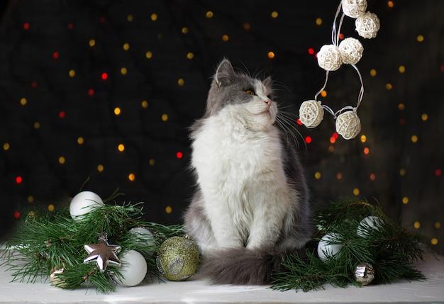 Chat sous un arbre de noël