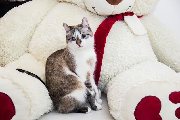 Le chat surpris. le chat a les yeux écarquillés de surprise.