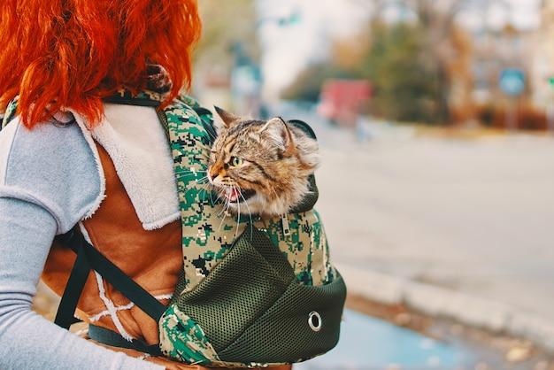 Chat tabby dans un sac.