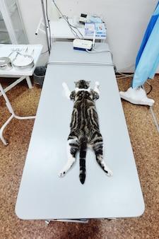 Chat sur la table d'opération