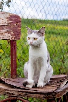 Chat tacheté blanc assis sur une vieille chaise dans le jardin