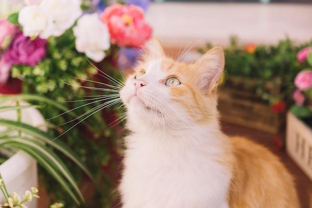 Chat sur terrasse avec des plantes
