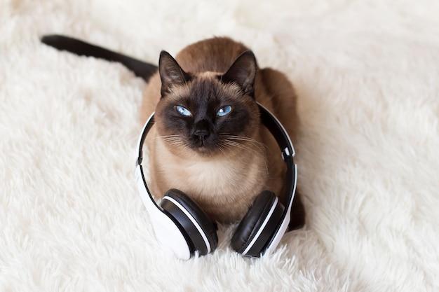 Chat thaï aux yeux bleus portant des écouteurs sur un fond blanc.