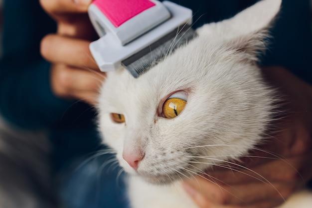 Chat tigré allongé sur la table au salon de coiffure pour chats tout en étant brossé et peigné.