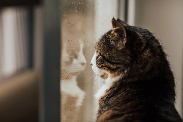 Chat tigré aux yeux verts regarde.