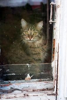 Chat tigré derrière la vieille fenêtre