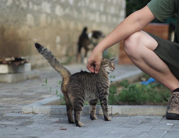 Chat tigré domestique moelleux marche dehors par une chaude journée d'été ensoleillée