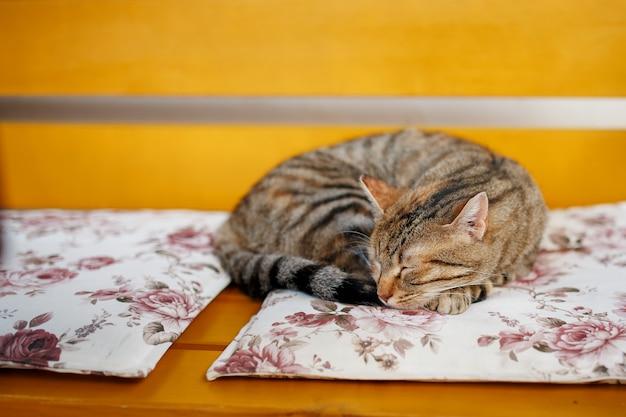 Un chat tigre dort doucement sur un banc orange, pelotonné en boule.