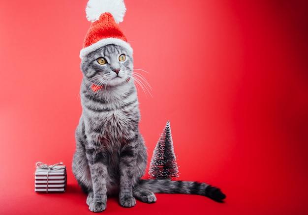 Chat tigré gris porte le chapeau du père noël sur fond rouge.