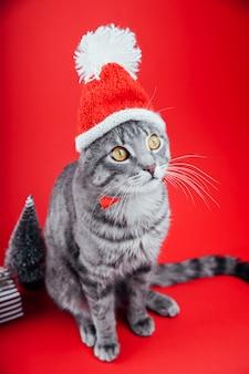 Chat tigré gris porte le chapeau du père noël sur le rouge