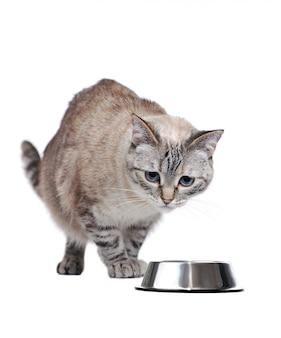 Chat tigré marchant vers son bol de nourriture