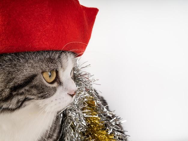 Chat tigré mignon avec chapeau de noël isolé sur fond blanc