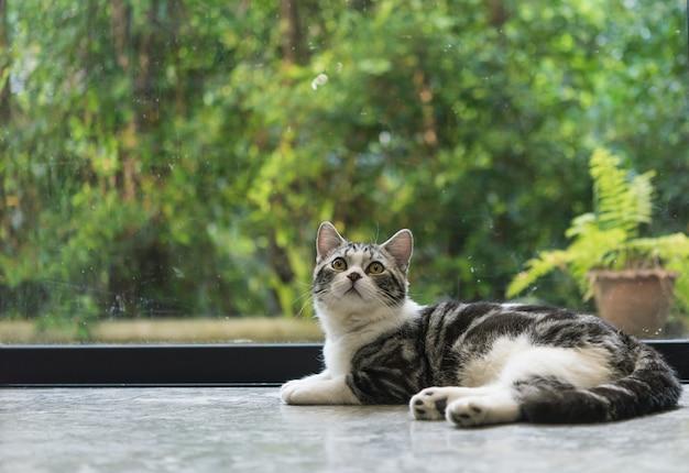 Chat tigré mignon s'asseoir dans le salon