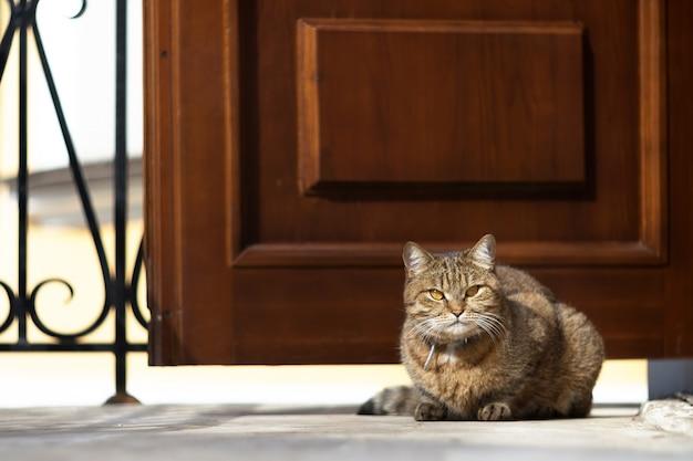 Chat tigré moelleux assis sur le porche