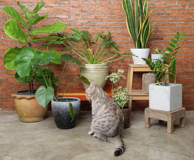 Chat tigré s'asseoir dans le mur de brique intérieur du salon avec de l'air purifier les plantes d'intérieur, monstera, philodendron, ficus lyrata, plante de serpent et bijou de zanzibar en pot