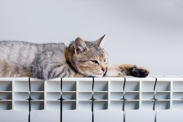 Un chat tigre se détendre sur un radiateur chaud