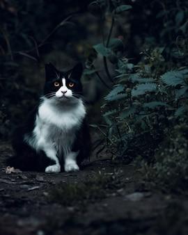 Chat tique brun se détendre dans le jardin en regardant autour et debout sur le sol plein de feuilles séchées.