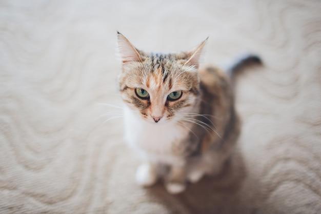 Chat très drôle en riant de près.