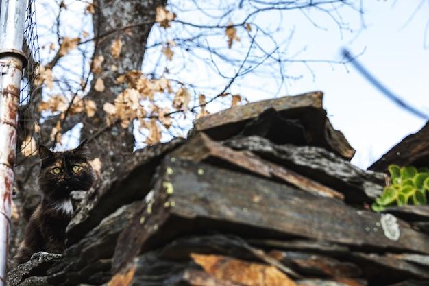 Chat tricolore appuyé sur un toit d'une maison rurale.