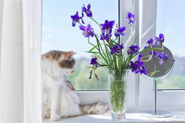 Chat tricolore assis sur un rebord de fenêtre avec un vase et des bouquets d'iris violet bleu