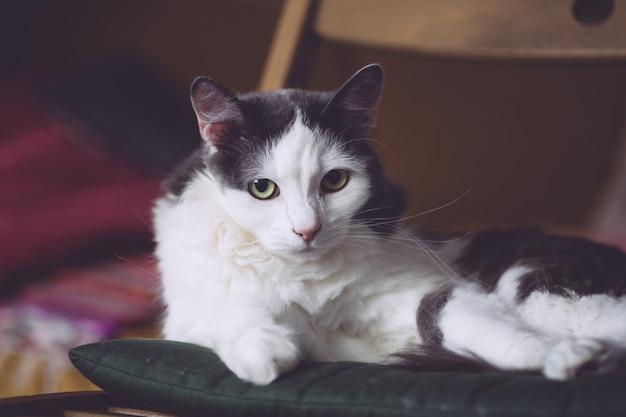 Un chat triste est assis sur une chaise et regarde dans les yeux