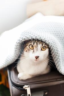 Chat sur valise sous couverture