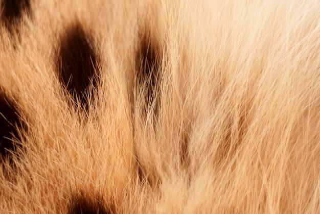 Chat wilde, texture de fourrure de serval. close up flou naturel