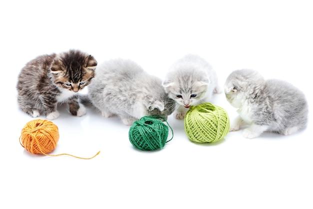 Chaton adorable rayé marron et chatons mignons moelleux jouent