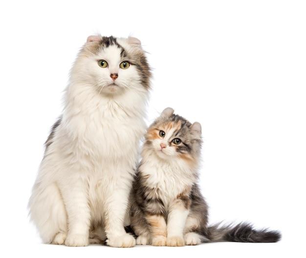 Chaton américain curl (3 mois) assis avec sa maman