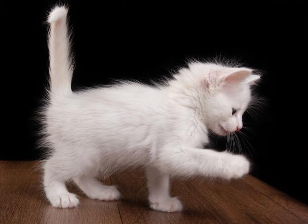 Chaton blanc, chaton blanc jouant sur une table en bois.