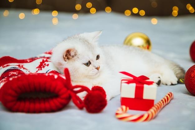 Un chaton britannique blanc joue sur une couverture avec des accessoires de noël - sucette, chaussettes, cadeaux, boules de noël. ambiance festive. en attendant les vacances.