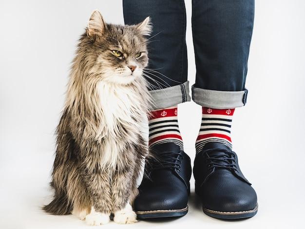 Chaton charmant, jambes d'hommes, chaussettes lumineuses et multicolores