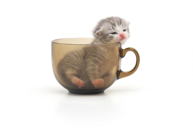 Chaton, dans, tasse