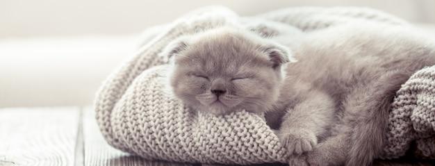 Chaton dort sur un pull