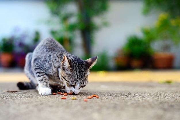 Chaton errant manger de la nourriture